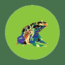 rainbowfrog